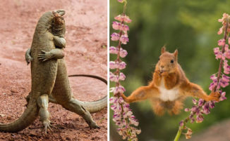 41 divertenti immagini di animali finaliste del Wildlife Photos 2018