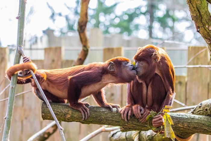 Foto Animali Innamorati