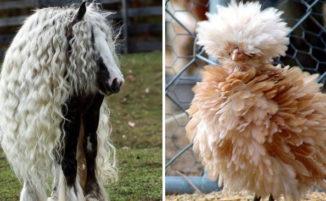 24 animali che vi stupiranno con il loro magnifico hairstyle