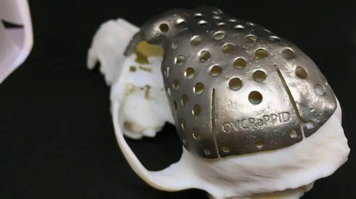 Cane Ottiene Cranio Stampato 3D Patches Canada