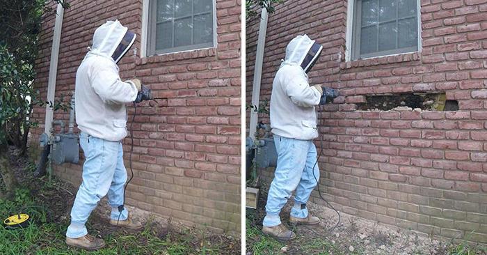 Cerca di liberare la casa di un cliente dalle api ma quello che trova nel muro è incredibile