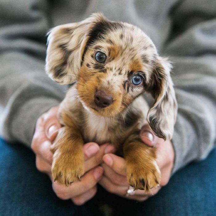 50 foto di teneri cuccioli che conquisteranno i vostri cuori