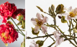 Artista italiana realizza bellissime composizioni floreali in vetro