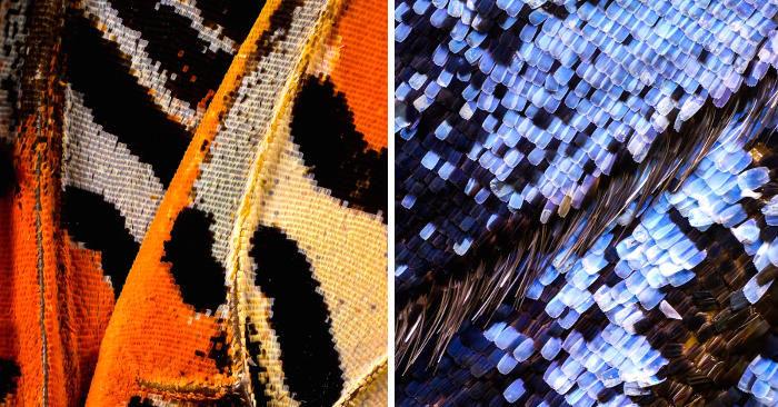 Straordinarie foto macro di ali di farfalla rivelano incredibili dettagli