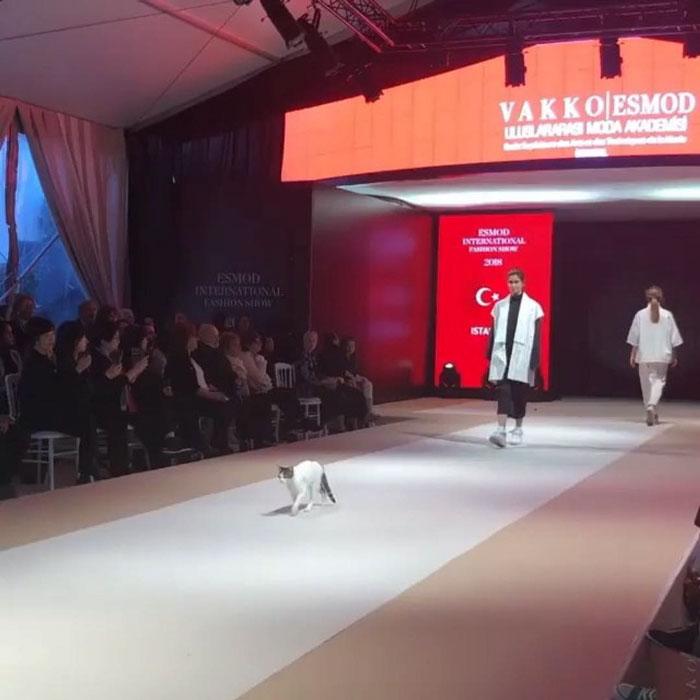 Gatto Disturba Sfilata Di Moda Esmod Istanbul