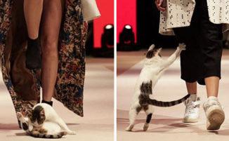 """Sfilata di moda disturbata da un gatto in passerella, che """"attacca"""" le modelle:"""