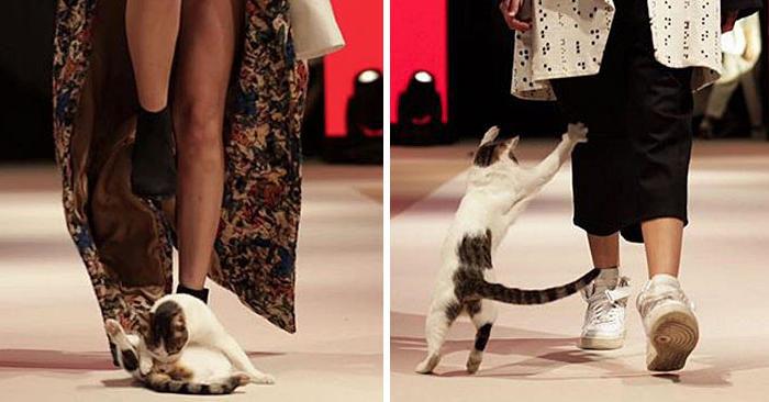 Sfilata di moda disturbata da un gatto in passerella, che