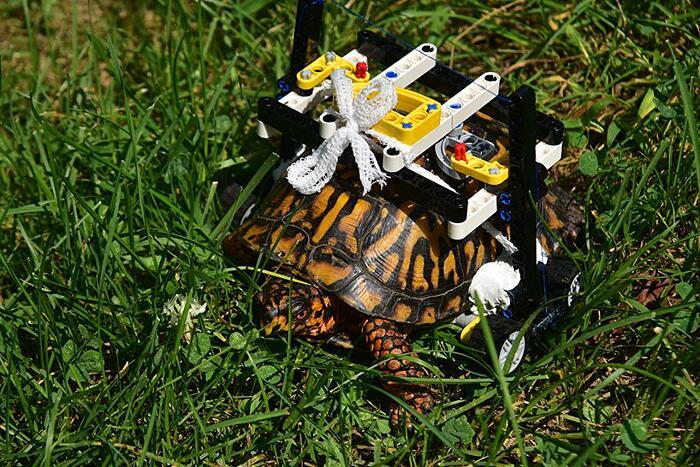 Tartaruga Ferita Riceve Sedia A Rotelle Lego Maryland Zoo