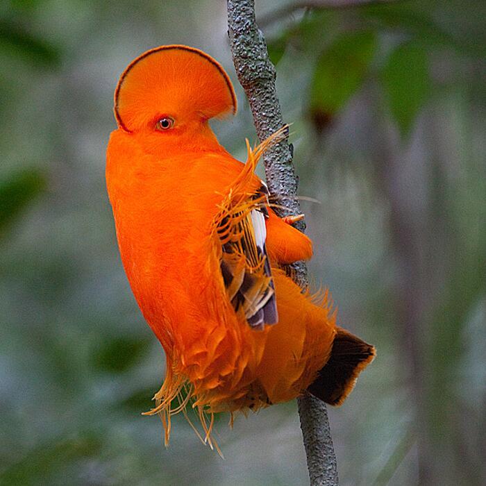 Uccelli Strani