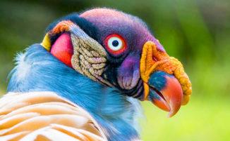 10 uccelli strani che sembrano più alieni che animali