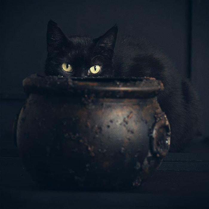 Foto Animali Halloween Catherine Holmes