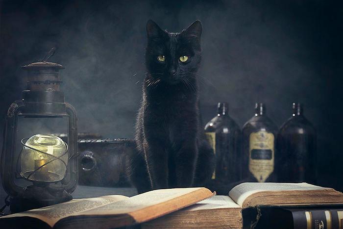 Ogni anno per Halloween fotografa animali