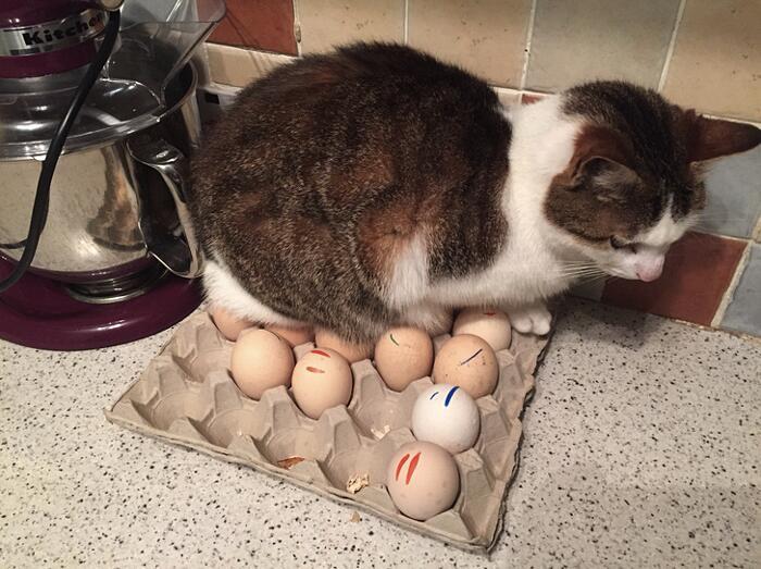 Foto Divertenti Cani Gatti Domestici