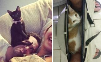 25 foto divertenti di animali domestici mostrano che la pazienza non è mai troppa