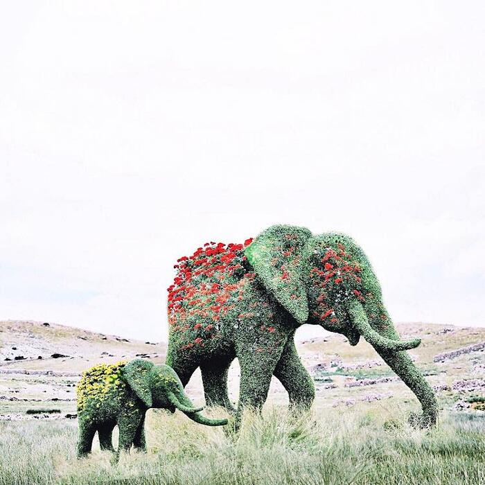 Foto Surreali Luisa Azevedo