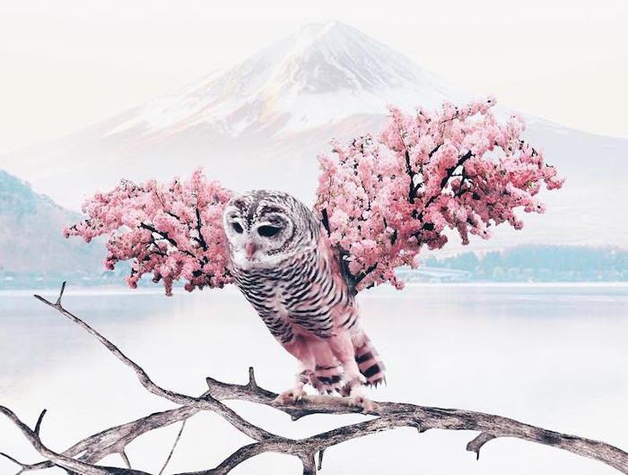 Artista crea foto surreali dalla combinazione di elementi inaspettati