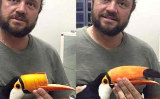Tucano ferito torna a mangiare grazie ad un nuovo becco stampato 3D
