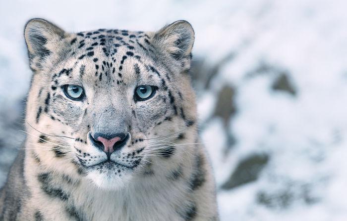Splendidi ritratti di animali in via di estinzione fotografati da Tim Flach