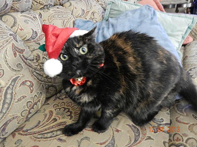 Foto Divertenti Animali Che Odiano Il Natale