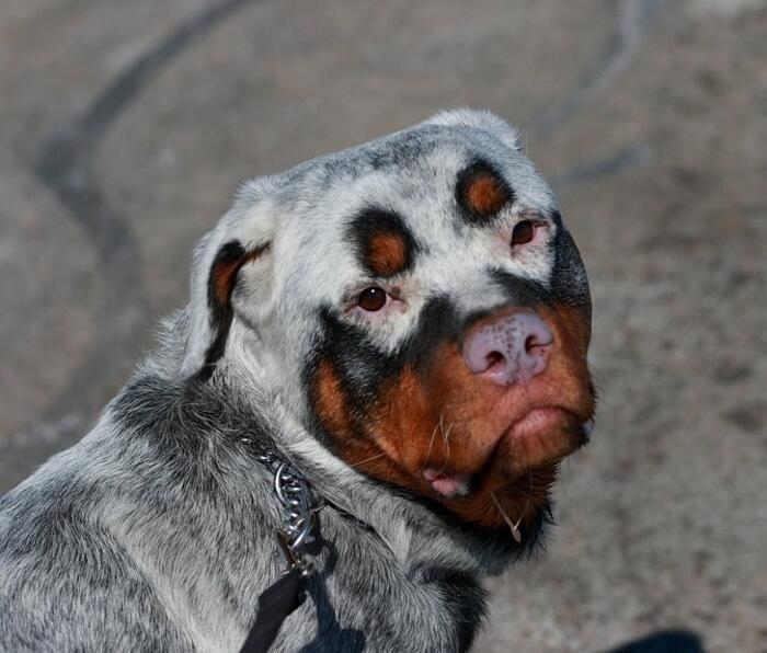 Animali Particolari Nati Con La Maschera