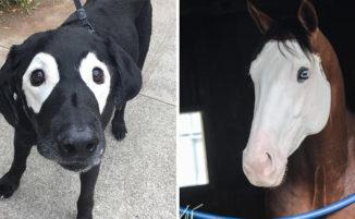 22 animali meravigliosi nati con la maschera