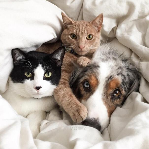 Cane e gatto amici