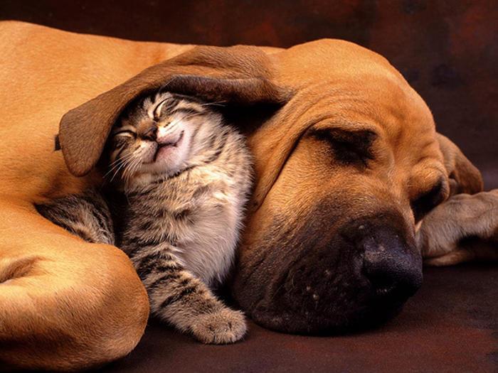 Cane e gatto amici per la pelle, 107 foto adorabili