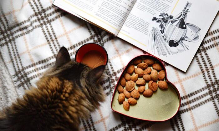 Il cibo vegan per gatti e cani fa bene o male?