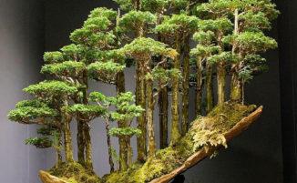 Incredibile foresta bonsai viene venduta per 14.000 Euro