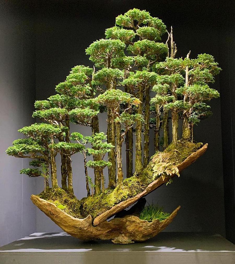 Foresta bonsai di cipresso giapponese, Masahiko Kimura