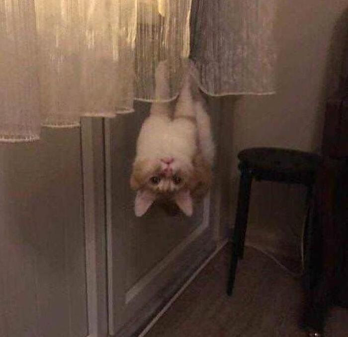 Foto divertenti logica dei gatti