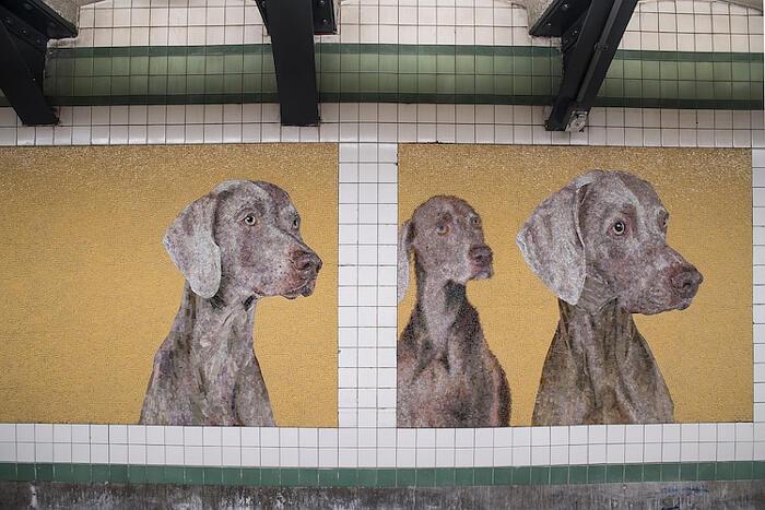 Metro New York con mosaici di cani vestiti da pendolari, William Wegman