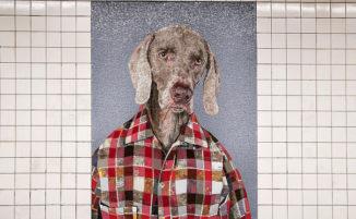 A New York la metro si popola di mosaici di cani vestiti da pendolari