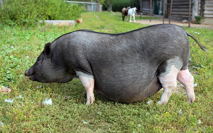 Foto Animali In Gravidanza