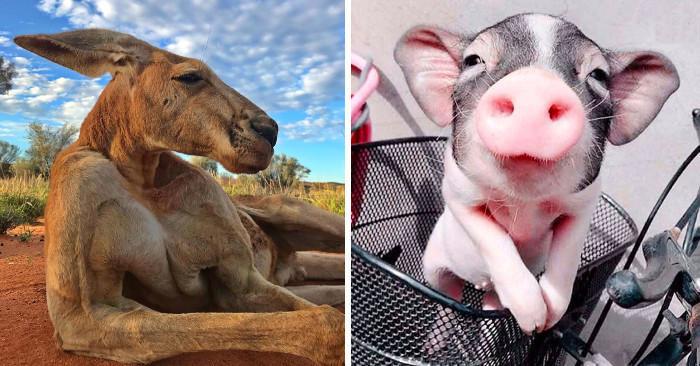 20 animali fotogenici nati per essere delle star