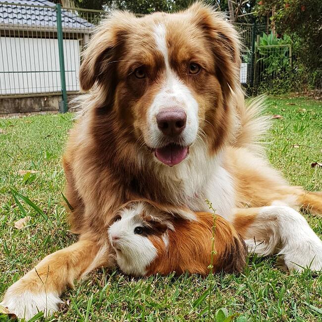 Animali Somiglianze Specie Diverse