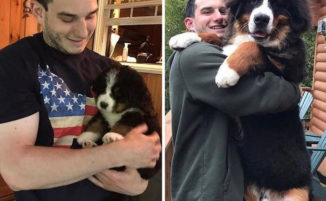 """20 foto di cani """"prima e dopo"""" dimostrano quanto il tempo scorra in fretta"""