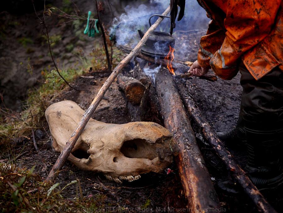 Foto Bracconieri Siberia Zanne Mammut Amos Chapple