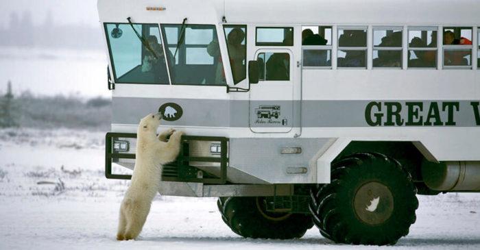 Un hotel su ruote che ti porta a dormire tra gli orsi polari dell'Artide