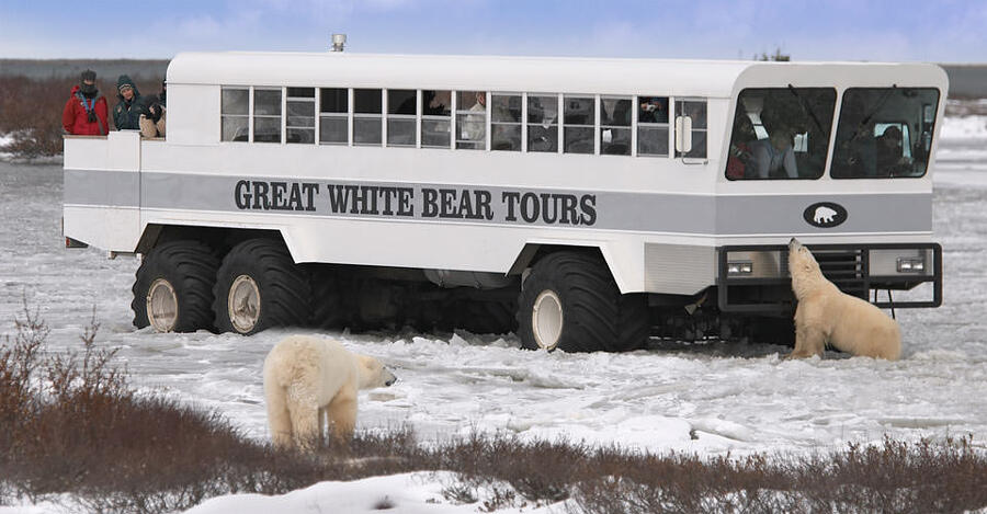 Hotel su ruote per ammirare gli orsi polari nell'Artide, Tundra Lodge