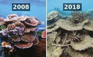 10 Year Challenge: come è cambiato il nostro pianeta in pochissimi anni