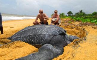 21 stupefacenti animali le cui dimensioni vi sorprenderanno