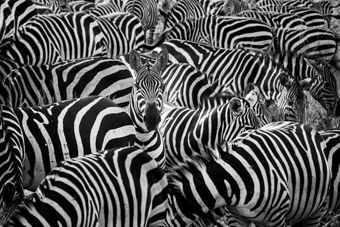 Animali Selvatici Elaborazioni Digitali Thomas Subtil