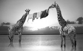 Artista immagina la vita segreta degli animali selvatici