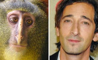 18 animali che assomigliano incredibilmente a personaggi famosi