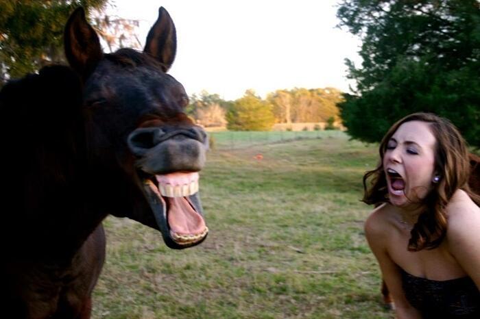 Foto Di Animali Scattate Al Momento Giusto