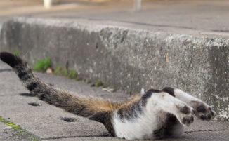 Fotografa gatti randagi che si divertono come fossero al parco giochi