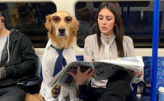 Fotografa trasforma il suo cane in un modello davvero particolare