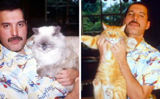 20 foto di Freddie Mercury e i suoi gatti che amava e trattava come suoi figli