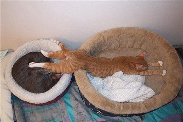 Gatti che dormono in posizioni strane